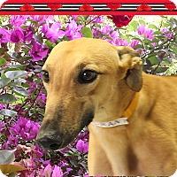 Adopt A Pet :: Dallas - Spencerville, MD