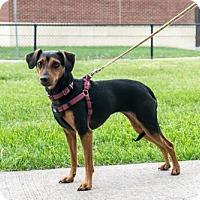 Adopt A Pet :: Carmen - Bridgewater, NJ