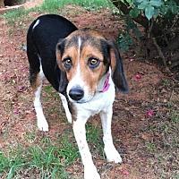 Adopt A Pet :: Indy - Winder, GA