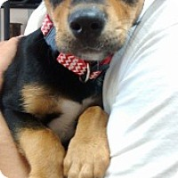 Adopt A Pet :: Princess - Laredo, TX
