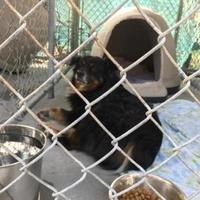 Adopt A Pet :: Little River - Myrtle Beach, SC