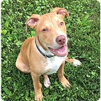 Adopt A Pet :: MILO - LaGrange, KY