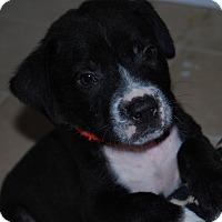 Adopt A Pet :: Jackson - North Myrtle Beach, SC