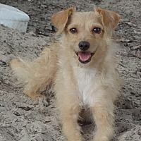 Adopt A Pet :: Alaina ~ Learning - St Petersburg, FL