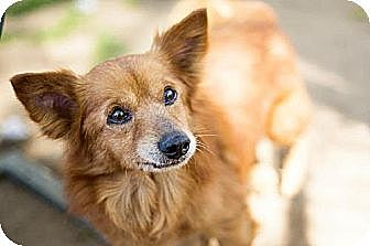 Terrier (Unknown Type, Medium) Mix Dog for adoption in Fresno, California - Sammy