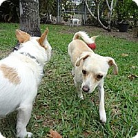 Adopt A Pet :: Coco - Miami, FL