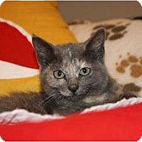 Adopt A Pet :: Catchup (LE) - Little Falls, NJ