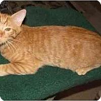 Adopt A Pet :: Sahara - Mesa, AZ
