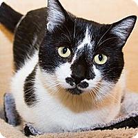 Adopt A Pet :: Arthur - Irvine, CA