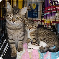 Adopt A Pet :: Marcel - Richmond, VA