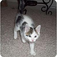 Adopt A Pet :: Spotters - Dixon,IL - Montgomery, IL