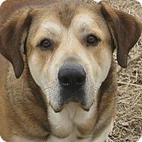 Adopt A Pet :: Tank - Derry, NH