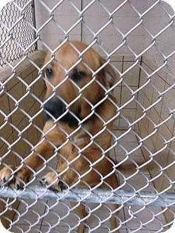 Hound (Unknown Type) Mix Dog for adoption in Thomaston, Georgia - Tank