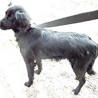 Adopt A Pet :: Midnight - Chewelah, WA