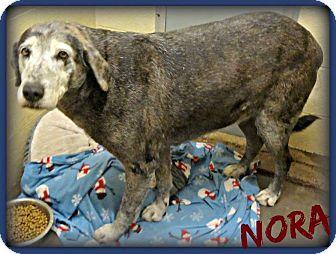 Hound (Unknown Type) Mix Dog for adoption in Benton, Arkansas - Nora