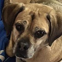 Adopt A Pet :: Henry - Gardena, CA