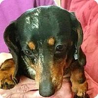 Adopt A Pet :: Swanee - Georgetown, KY