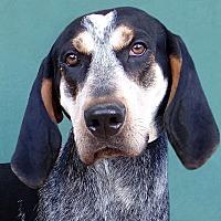 Adopt A Pet :: Red - Renfrew, PA