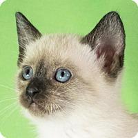 Adopt A Pet :: Umberto 8 - Austin, TX
