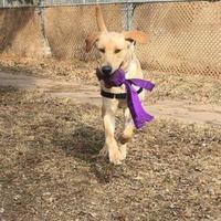 Adopt A Pet :: Mario - Hastings, MN