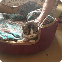 Adopt A Pet :: Siler - Tarboro, NC