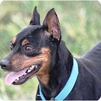 Adopt A Pet :: Buddy - Topeka, KS