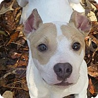 Adopt A Pet :: Quincy - Camden, SC