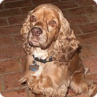Adopt A Pet :: Marshall Tucker - Sugarland, TX