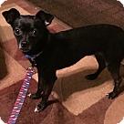 Adopt A Pet :: Emmy - Torrington, WY
