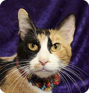 Calico Cat for adoption in Jackson, Michigan - Floozy