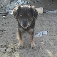 Adopt A Pet :: Mamacita - Palm Desert, CA