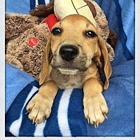Adopt A Pet :: Satchel - Greensboro, GA