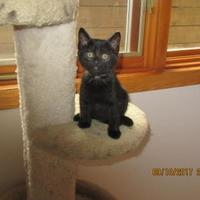 Adopt A Pet :: Mercury - Fort Collins, CO