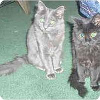 Adopt A Pet :: Mikayala & Mallory - Arlington, VA
