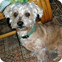 Adopt A Pet :: Missy - Suwanee, GA