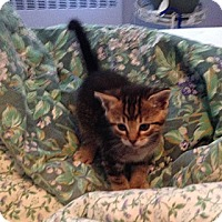 Adopt A Pet :: Prudence - Whitestone, NY
