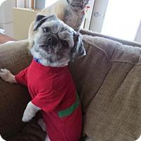 Adopt A Pet :: Teddy - Saskatoon, SK