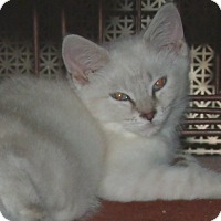 Adopt A Pet :: BEETLE - Acme, PA