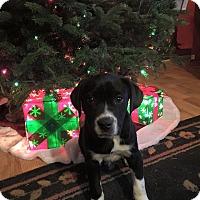 Adopt A Pet :: Frost - Burlington, NJ