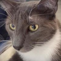 Adopt A Pet :: Grayson - Wichita, KS