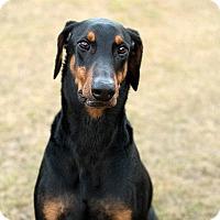 Adopt A Pet :: Deuce - South Dennis, MA