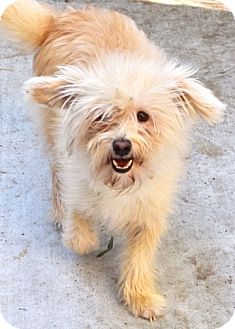 Terrier (Unknown Type, Small) Mix Dog for adoption in Dublin, California - Duncan