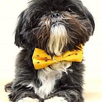 Adopt A Pet :: Skipper - Dublin, CA