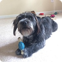 Adopt A Pet :: Chandler - Raleigh, NC