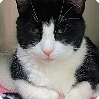 Adopt A Pet :: Moonpie - Lunenburg, MA