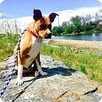 Adopt A Pet :: Mason - Billings, MT