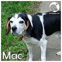 Adopt A Pet :: Mac - Pittsburgh, PA