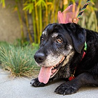 Adopt A Pet :: Offred is PERFECT - Los Angeles, CA