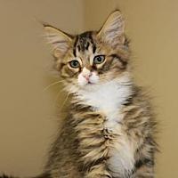 Adopt A Pet :: Pb litter - Deanna - Livonia, MI