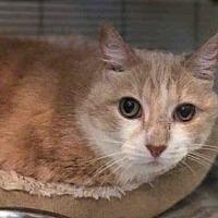 Adopt A Pet :: TINY FEET - Urbana, IL